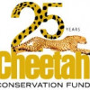 Cheetahs Alive photo exhibition – London