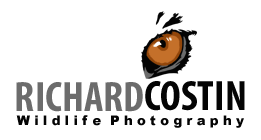 Images and Articles on nature photography from wildlife photographer Richard Costin