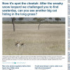 Spot the Cheetah Daily Mail article