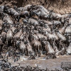 The Great Migration – Photo Safari 2013