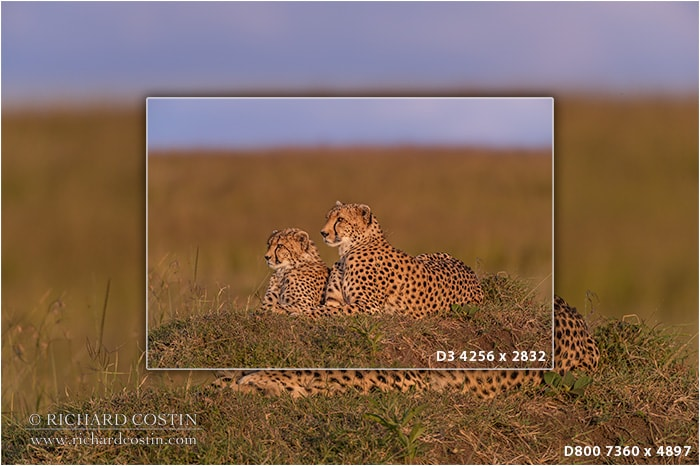 Nikon D3 and D800 resolution comparison