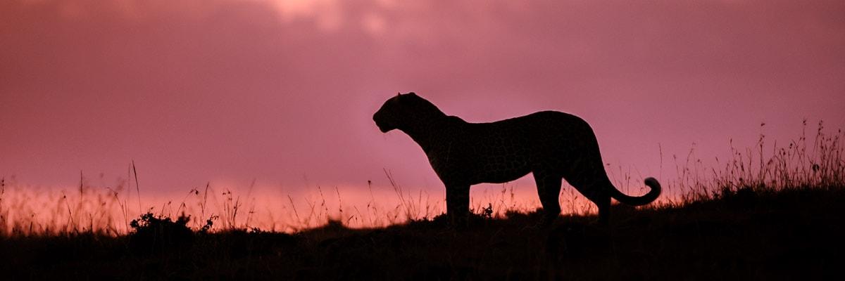 wildlife photography galleries, richard costin