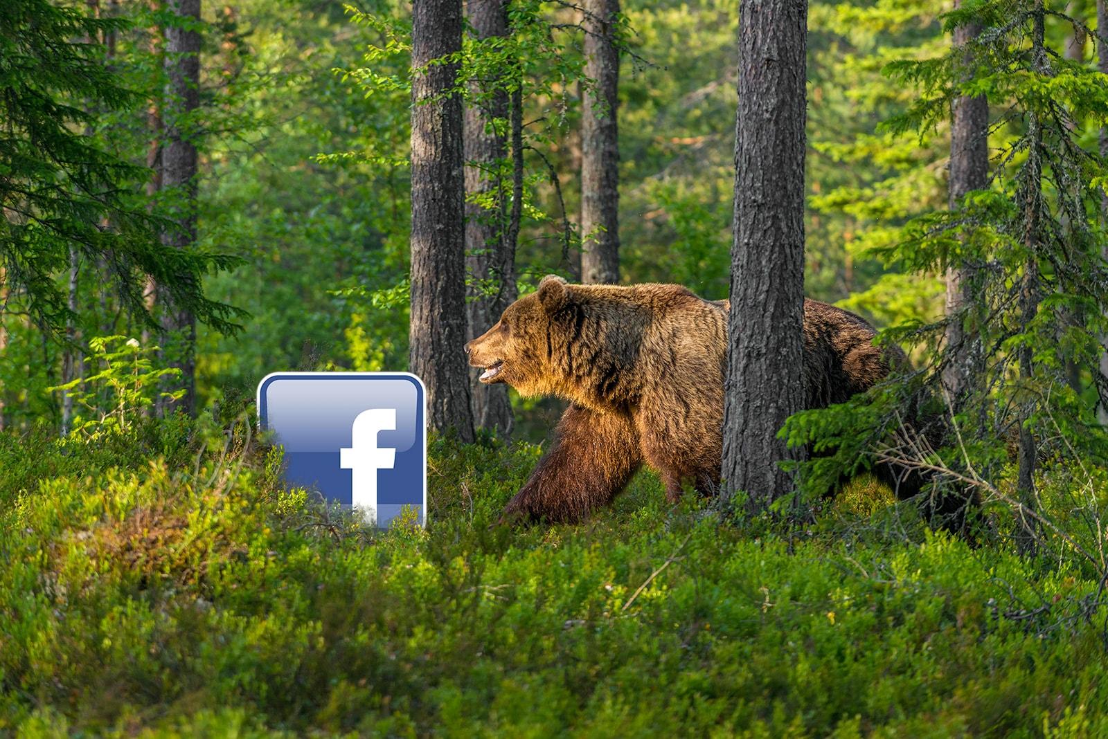 wildlife photography Facebook, richard costin
