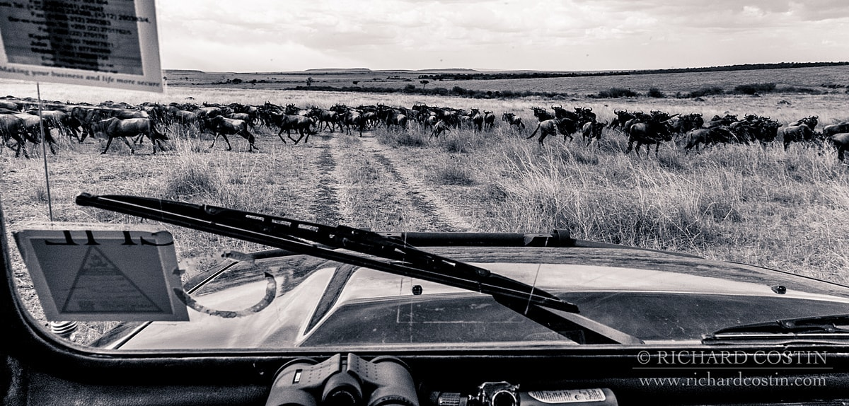 Their home for the trip on my dashboard during the Wildebeest migration