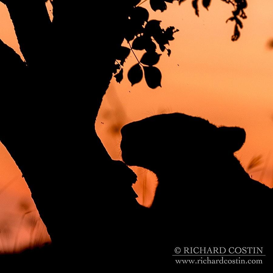 Richardostin_AfricaLive_05c_001