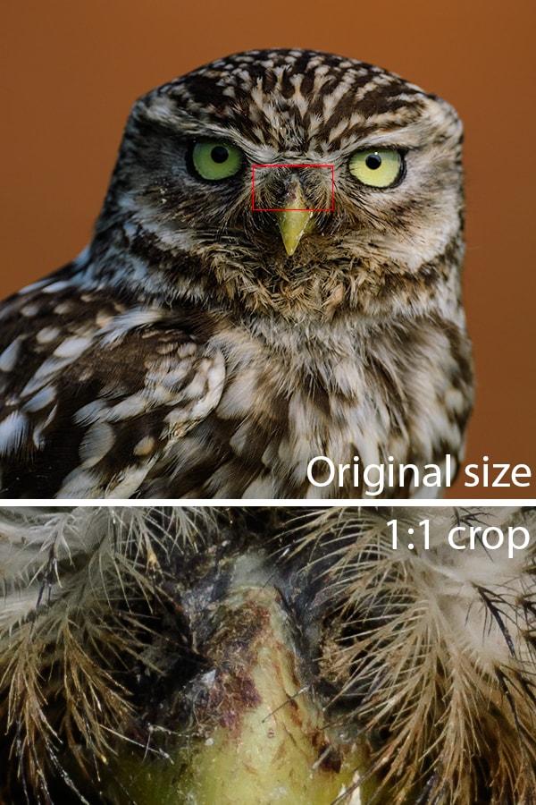 Nikon D500 image quality full to crop comparison, wildlife photographer Richard Costin