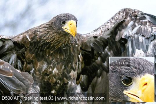 Nikon D500 auto focus test - Wildlife