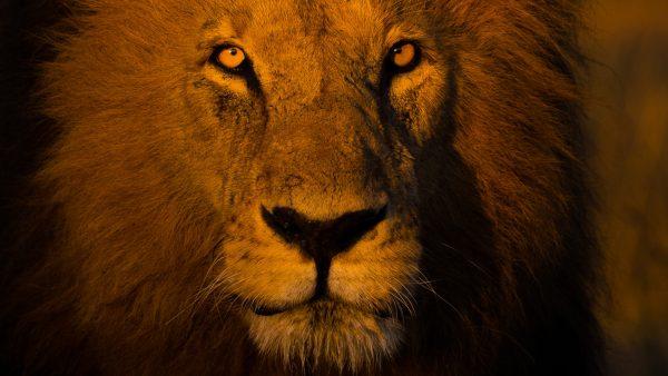 Wildlife Photography Safari - Big Cats of the Masai Mara, 2022